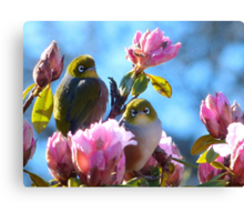 Hey!!... Spring Seems A Little Early This Year!! - Silver-Eyes - NZ Canvas Print