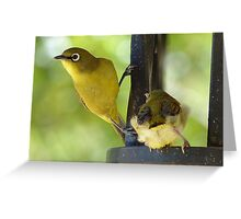 This Is My Child - Cape White Eye - South Africa Greeting Card