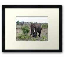 I Hear The African Continent - Elephant - Kruger National Park Framed Print