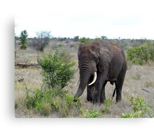 I Hear The African Continent - Elephant - Kruger National Park Canvas Print