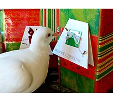 Form Me To YOU... - Dove & Christmas - NZ Photographic Print