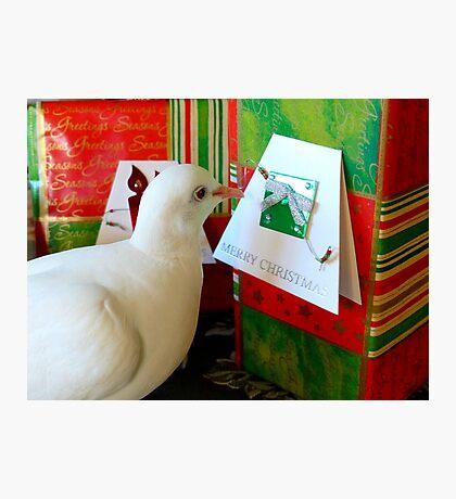 Form Me To YOU... - Dove & Christmas - NZ Photographic Print