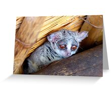 Hush Now... We're Trying To Sleep - Bushbaby - South Africa Greeting Card