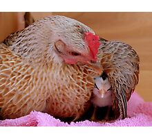 Ahhh.. My Little Sleeping Beauty - Silver-Duckwing - NZ Photographic Print