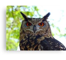I'm Silent... But Deadly!- Spotted-Eagle Owl - SA Canvas Print