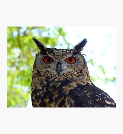 I'm Silent... But Deadly!- Spotted-Eagle Owl - SA Photographic Print