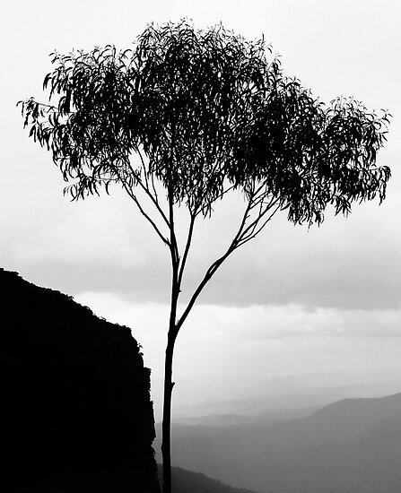 Gumtree silhouette, Blue Mountains by JoshuaStanley