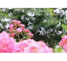 Painterly Pink Wild Roses with Green White Swirls Photographic Print