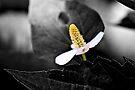 Spotlight by PhotosByHealy