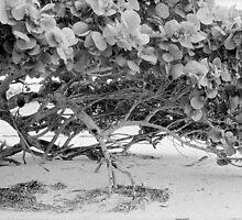 Seagrape by njordphoto