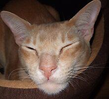 Sleeping it off by MisterD