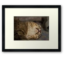 Cute sleeping kitten Framed Print