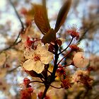Think Spring by MEV Photographs