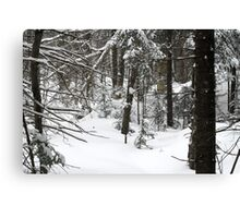 Still Winter :) Canvas Print