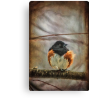 Winter Visitor Canvas Print