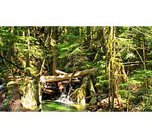 Pacific Northwest Forest Photographic Print