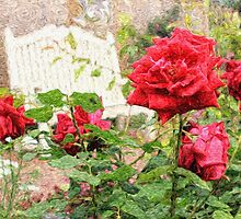 Beautiful Red English Roses with White Bench by Beverly Claire Kaiya