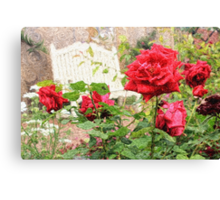 Beautiful Red English Roses with White Bench Canvas Print