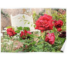 Beautiful Red English Roses with White Bench Poster
