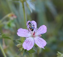 Beetle on Flower by Eggtooth