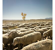 Moving the flock Photographic Print