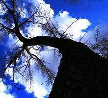 Tall Tree by stacyrod