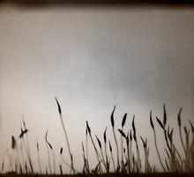 Harmony by Leah Highland