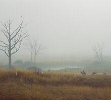 Kangaroos in the top paddock.  by Wendy Laigne-Stuart