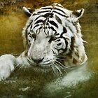 White Tiger's Bathtime by Tarrby