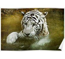 White Tiger's Bathtime Poster