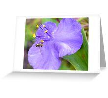 Spiderwort & Bee Greeting Card