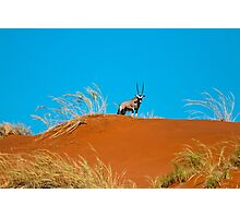 Oryx on an African Hill Photographic Print