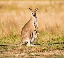 Mother and Joey by dawesy