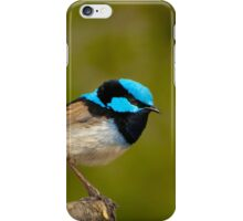 The Superb Fairywren (male) iPhone Case/Skin