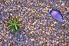 Beach Texture by Travis Easton