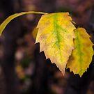 Leafy by JEZ22