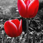 Red Tulips by Luis Correia