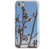 Pussy Willow 1 iPhone Case/Skin