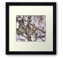 Pussy Willow 2 Framed Print