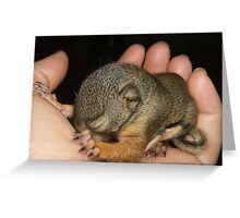 Baby Pine Squirrel Greeting Card