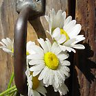 Daisies at the Door by Judy Olson