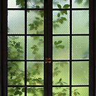 Summer Window by Judy Olson