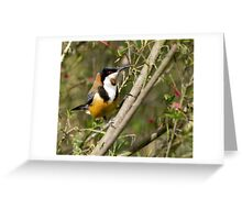 honeyeater Greeting Card