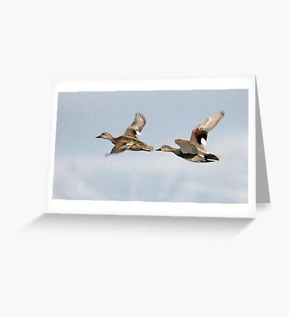 Gadwall Pair in Flight Greeting Card