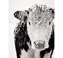 Shaggy Beast Photographic Print