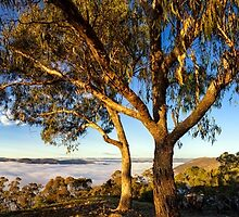 Sun Kissed,Hill End NSW by karlstrand