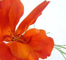 Pretty Poppy by Leah Highland