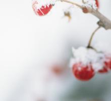 Snowy Berries Sticker