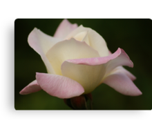 Pink and White Rose Canvas Print