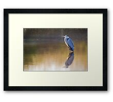 Grey Heron (Colour Pencil Effect) Framed Print